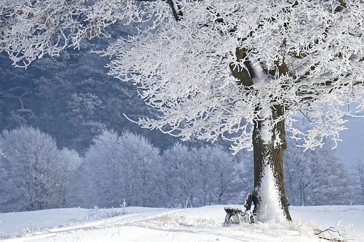 A very cold scene with frosted tree foreground, snow on the ground, and snow-covered trees in the background. The picture is largely white and very wintery.